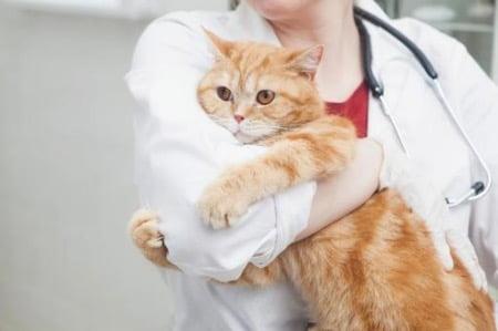 動物病院のイメージ画像(猫)