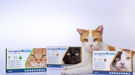 海外版「レボリューションプラス猫用」の「ストロングホールドプラス」