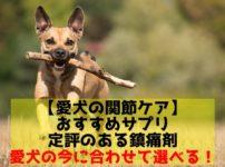 犬のおすすめ関節ケアサプリ特集
